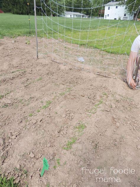 frugal foodie organic edible gardening a