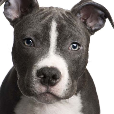 boy pitbull names names names for your or puppy