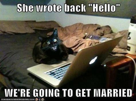Hello Meme Funny - funny animal memes part 2