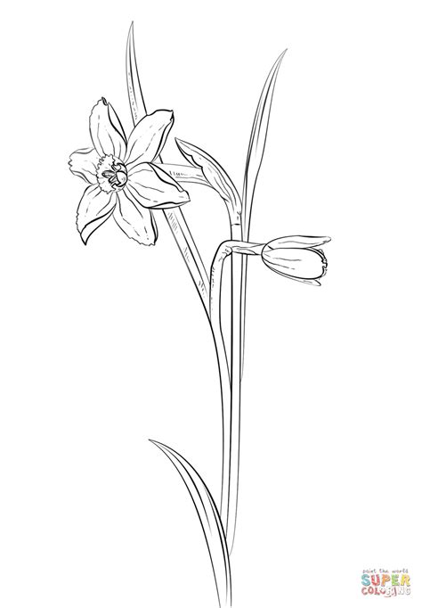 narcissus flower coloring page coloring paper daffodil coloring pages