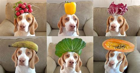 veggies for dogs fruits and veggies for cutestuff co