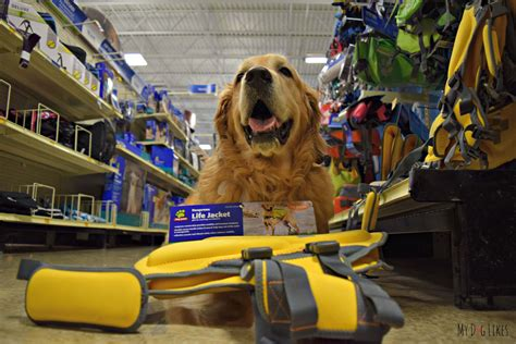 jacket petsmart 5 swimming safety tips to keep your pup safe in the water