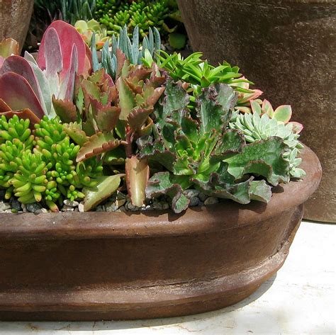 Cactus Planter Ideas by 149 Best Ideas About Cactus Gardening On