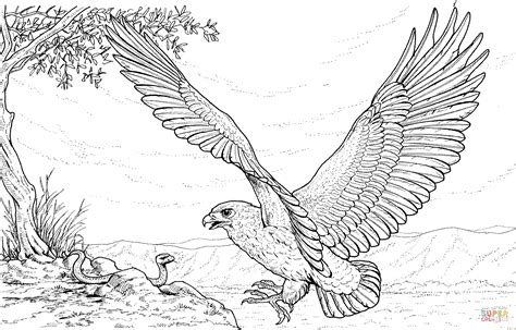 coloring page of an eagle s nest eagle attacking snake coloring online super coloring