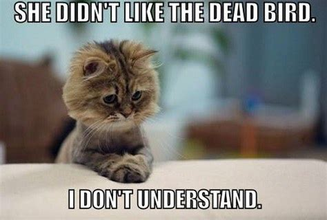 The Best Cat Memes - all time ideal compilation of the funniest cat memes on