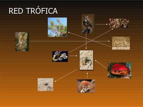 cadenas alimenticias del desierto el desierto del sahara