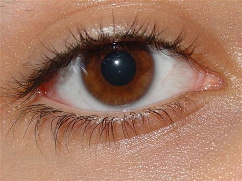Imagenes De Ojos Zarcos | el significado del color de tus ojos taringa