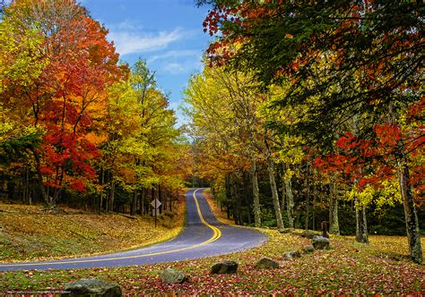 wallpaper autumn road forest trees