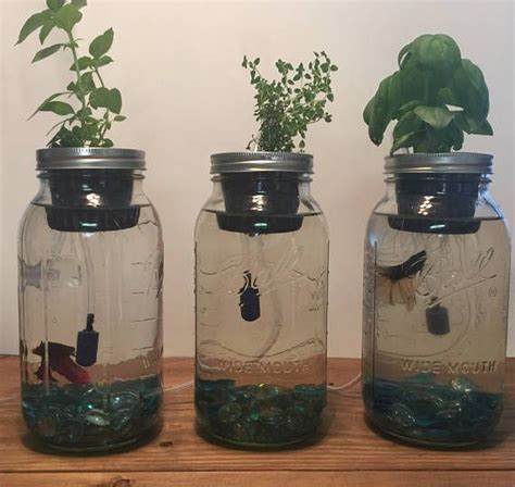 indoor aquaponics kitmason jar aquaponics systemindoor