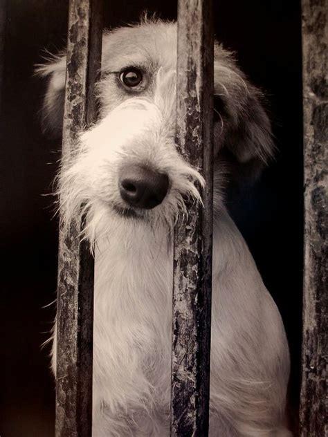 no maltrato animal digamos no al maltrato animal taringa