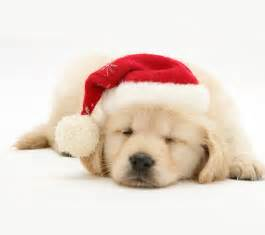 cute christmas puppies new calendar template site
