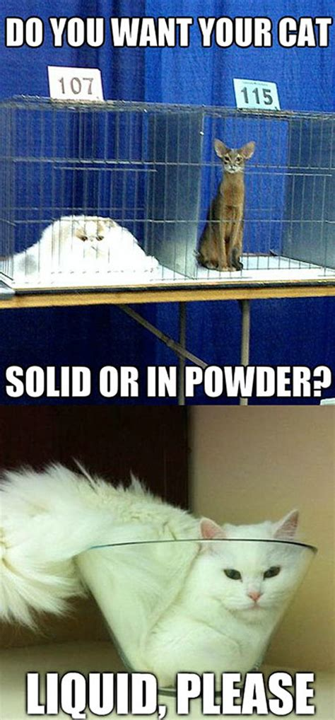 why cats are liquids the meta picture how do you want your cat the meta picture