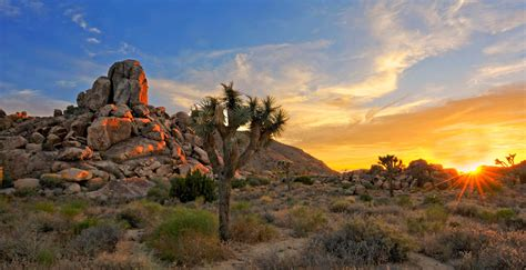 joshua tree national park vacation travel guide   information aarp