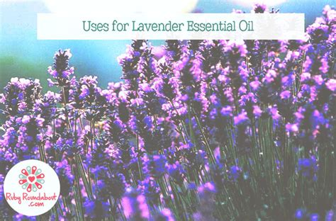 uses for lavender essential oil ruby roundabout