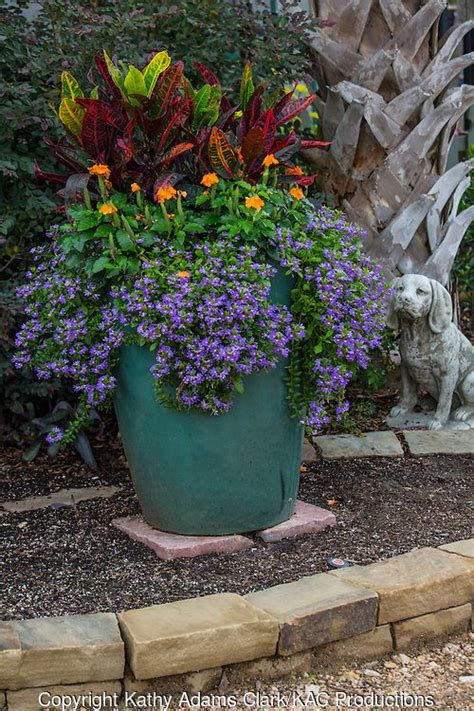 17 best images about fall flowers and container gardens on pinterest fall flowers kale and
