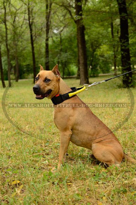 trouble house training dog nylon dog collars for pitbulls