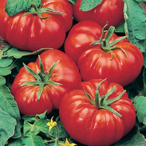 Tomato Marmande AGM Seeds D. T. Brown Vegetable Seeds