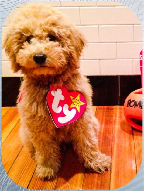 infant puppy costume ty beanie baby costume for puppy baby