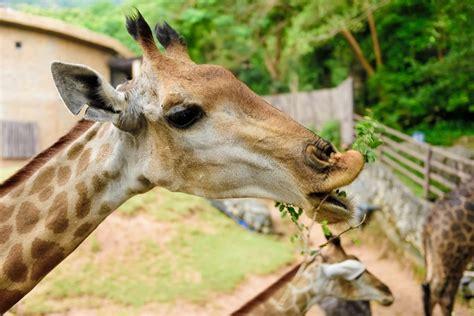 imagenes de animales zoologico animales del zool 243 gico