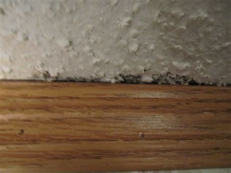 What Does Home Depot Look For In A Background Check How Does Mold Look Like In A Bathroom Does This Look Like Mold Floor Roofing Home