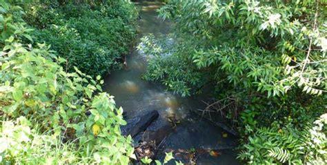 Teakholz Preise M3 by Naturteak Sch 252 Tzen Forestry Teakplantagen