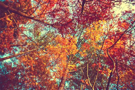 fall desktop wallpaper tumblr autumn leaves tumblr wallpaper