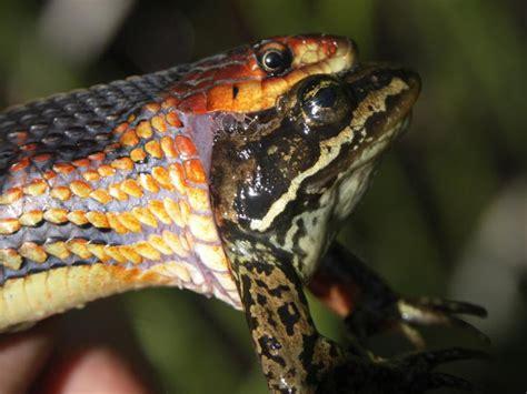 snakes eating animals animals eating animals