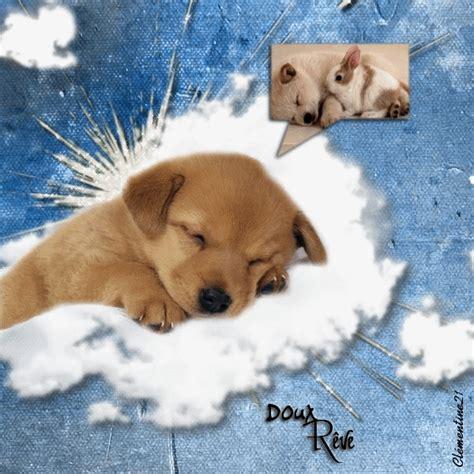 imagenes animales movimiento imagenes perritos tiernos movimiento imagui