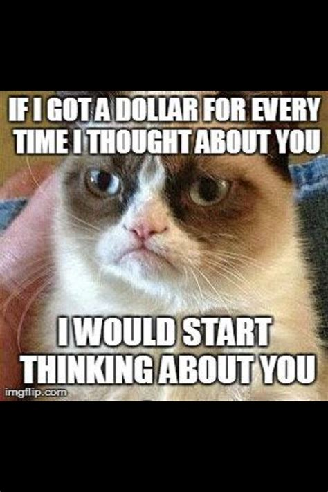 Thinking Cat Meme - 1000 images about grumpy cat on pinterest grumpy cat