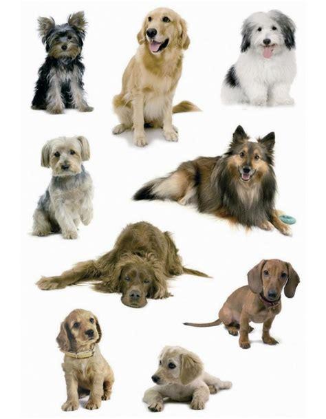 Aufkleber Babyalbum by S 252 223 E Hunde Sticker Verschiedene Rassen Von Decor Herma