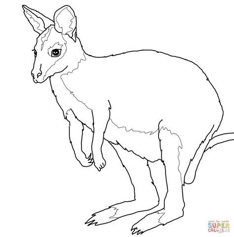 Wallaby Coloring Page Printable   wallaby coloring page free printable coloring pages