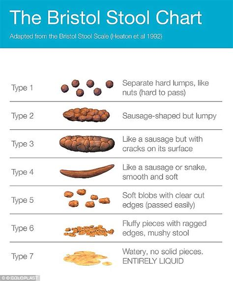 guide to the poo and our gut health