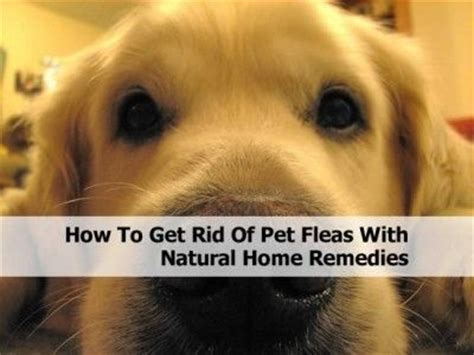 how to get rid of pet fleas with home remedies
