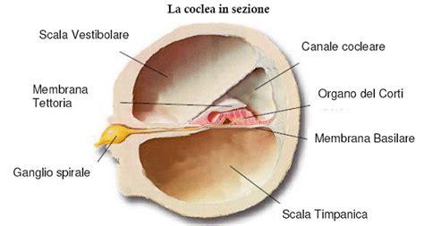 malattie dell orecchio interno condotto cocleare