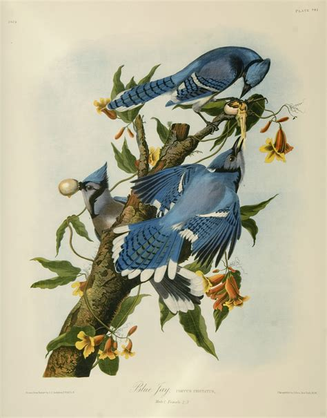 john james audubon wallpapers art prints posters gallery