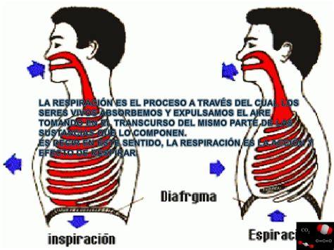 la respiracin el el proceso de la respiraci 243 n