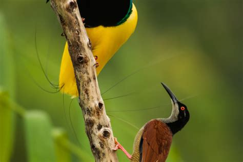 wild romance weird animal courtship and mating rituals