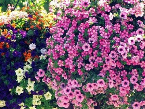 sun l for plants 77 best images about hanging baskets on