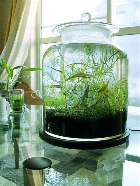 small water garden ideas 27 indoor water garden ideas small garden ideas