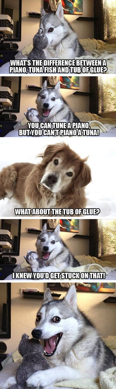 Dog Pun Meme - 15 pun husky meme jokes are insanely cute dose of funny