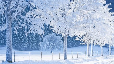 the most amazing best frozen wallpapers on the web amazing snowing nature wallpapers xcitefun net