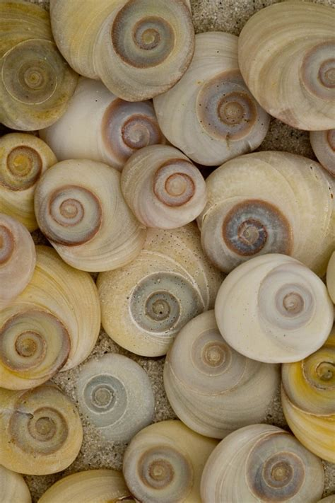 L Shells by Oeil De Sainte L 233 Gende Et Signification