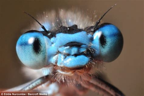 bug eyed bug eyed the faces of britain s insects daily mail