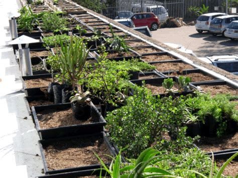 Mba Durban by South Africa Archives Greenroofs Sky Gardens