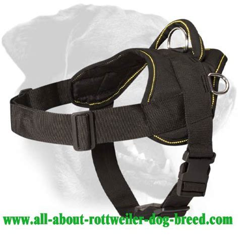 how much walking does a rottweiler need order rottweiler harness walking pulling