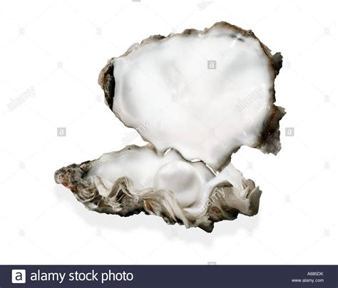 oyster shell oyster oyster shell open oyster shell with pearl inside