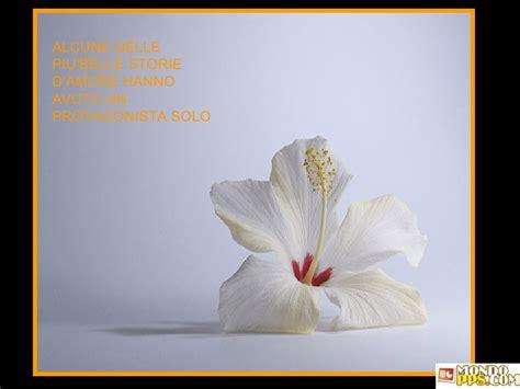 presentazione2 fiori e frasi celebri