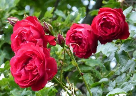 gallery  taman bunga mawar