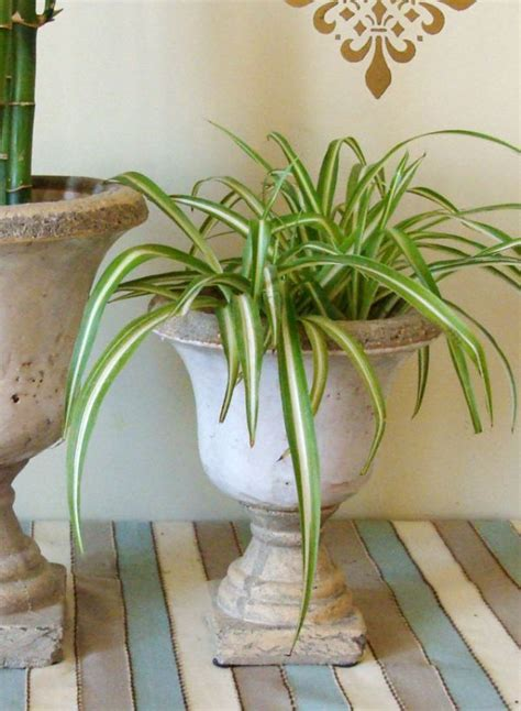 air purifying houseplants  decorate  home