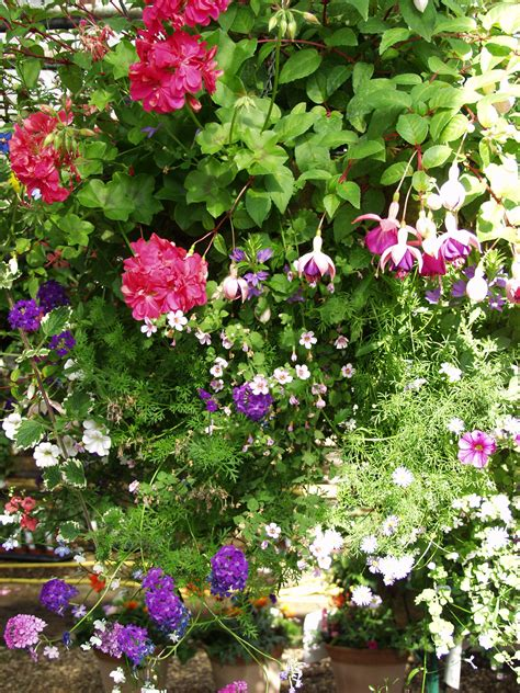 hanging baskets st albans aylett nurseries